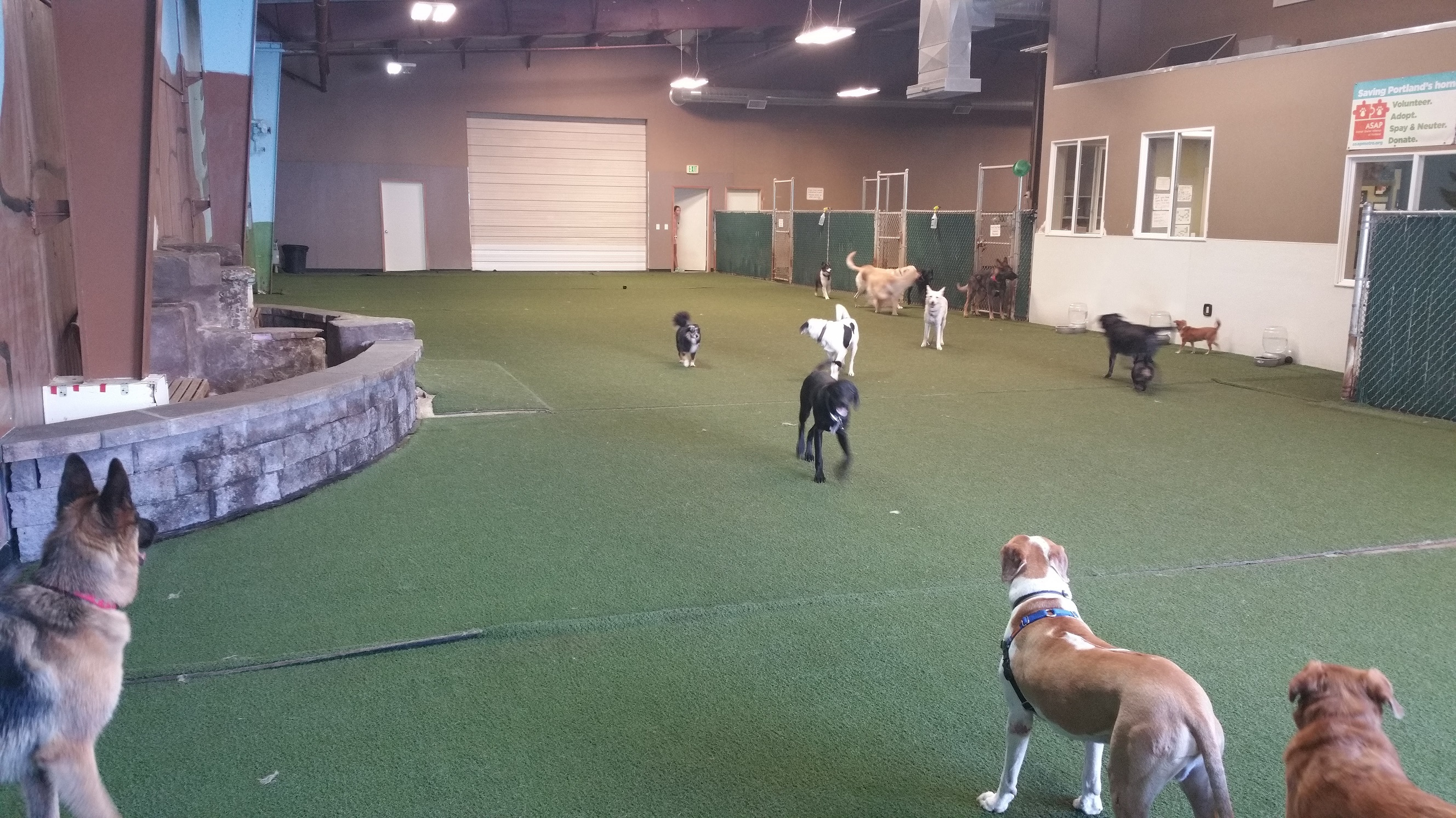 Indoor Dog Park Portland